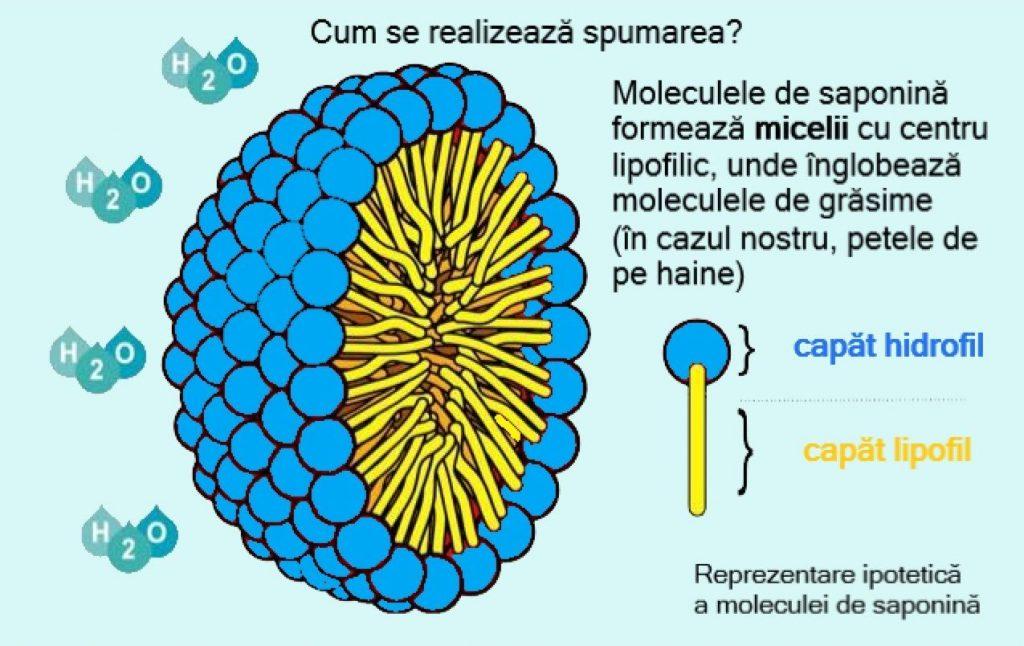 detaliu miceliu saponine - nucile de sapun